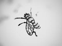 Fly Sketch