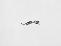Tiger Texture