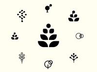 Molecule  Plants