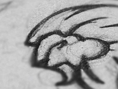 Rock lion animal rock head sketch logo hair close s steva
