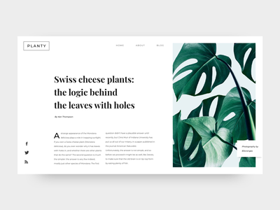 daily UI #035 - Blog Post plant cheese swiss daily ui 035 clean daily ui challenge daily ui challenge dailyui text philodendron cactus magazine typography blog design blog header nature plants blog post blog