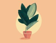 Ficus Illustration