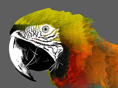 Yellow Parrot illustration design