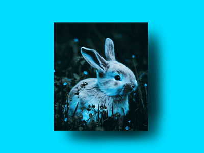 The Blue Rabbit Illustration light fushion graphic design design illustration