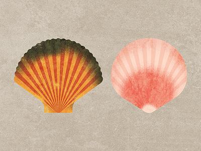 Seashells seashell sea
