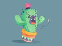 Bear Cactus