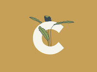 C is for Calathea