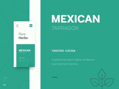 Type \ 04 - Mexican Tarragon motivation inspiration typografi tarragon green leaves font family type art design concept creative minimal clean poster typeface mexican herb plant typography type