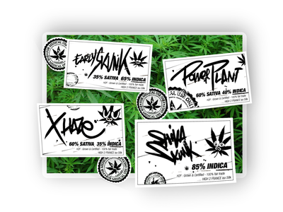 Would you like some Tegridy ? colorado tag etiquette oops dontdodrugs indica southpark medical hand written hand lettering green plants power plant identity branding label identity design tegrity vector design