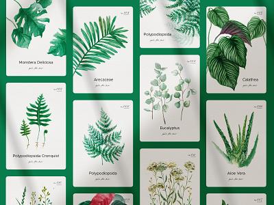 Botanical - watercolors collection botany green plants hand drawn watercolor iza kasza botanical illustration botanical art botanicals botanic illustration