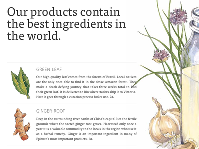 Epicure Ingredients typography product advertising illustration herbs garlic milk root ginger leaf ingredients epicure