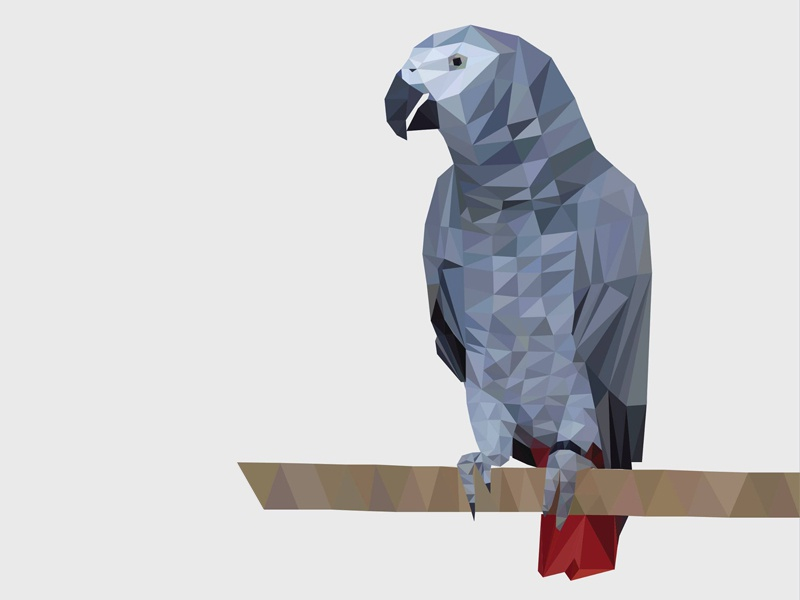 Lowpoly Illustration of a Parrot design illustrator african grey parrot illustration triangle lowpoly