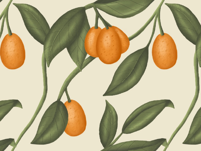 Kumquat pattern vintage illustration botanical kumquat repeating pattern pattern