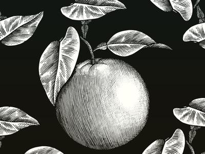 Orange Botanical fruit linocut pen and ink line art food art etching illustration scratchboard woodcut