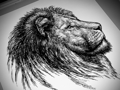 Lion Illustration pen and ink logo linocut woodcut artwork engraving illustration line art woodcuts steven noble