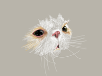 Mr Sprinkles white drawing illustration cat
