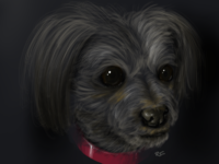 The Dog fuzz fur collar procreate dog