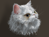 The Cat meow white persian fur procreate cat