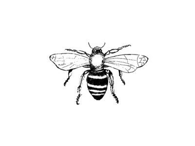 Bee illustration handdrawn