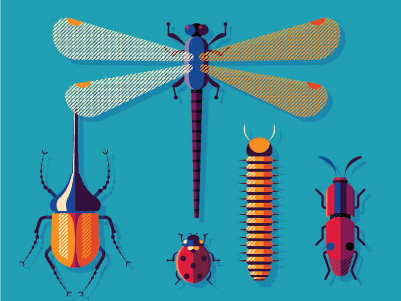 Bugs Family beetles design vector illustration insects bugs