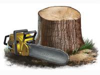 Tree & Chainsaw