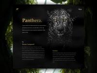 Panthera - Daily exploration
