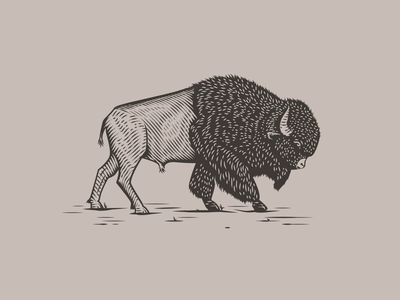 Bison vector scratchboard engraved etching buffalo bison vintage