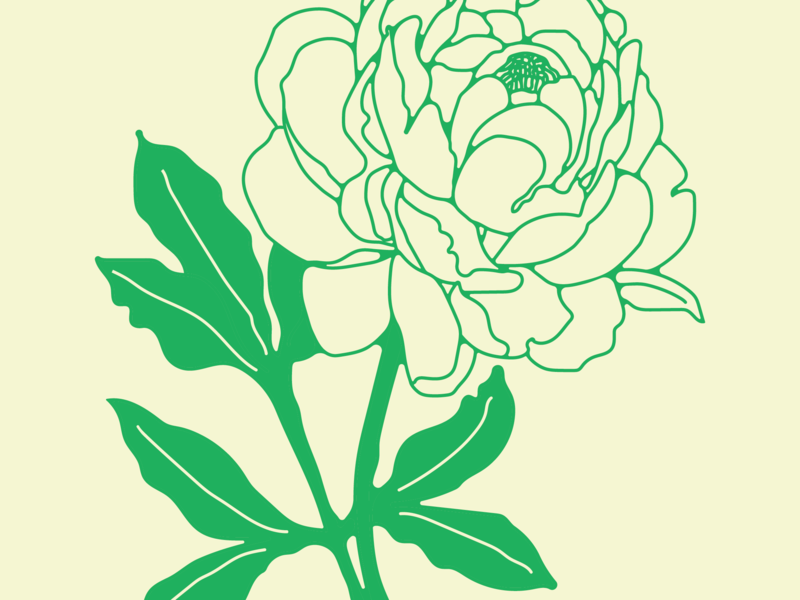 Peony flora form and flora flower peony illustration