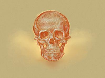 Skull study study art pencil pastels sketch line illustration skull drawing anatomy