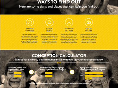 Conception Calculator web design interactive