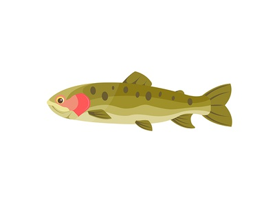 Flat Trout illustration simply fish nature color vector design flat