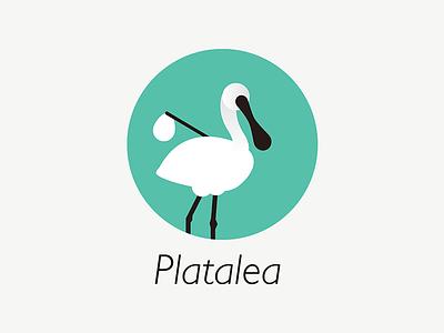 Platalea Immigrants immigrant