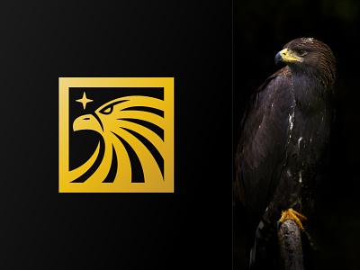 Dream Eagle Logo company silhouette gold luxury modern dream star square face head falcon hawk eagle animal illustration exclusive logo vector branding design