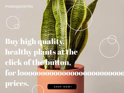 Mesapotamia Frontpage UI mesapotamia dribbble vector figma design