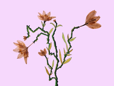Lily Lightning Tree gold green pink photoshop botanical illustration hand drawn hand drawing pressed flowers
