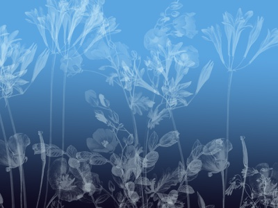 Flowers blackandwhite black blue white flowers color palette fyp expression colors art artwork illustrator design illustration