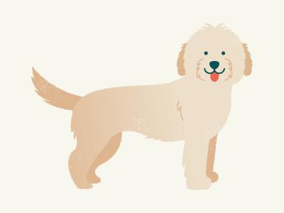 Goldendoodle breed illustration puppy poodle golden retriever goldendoodle dog