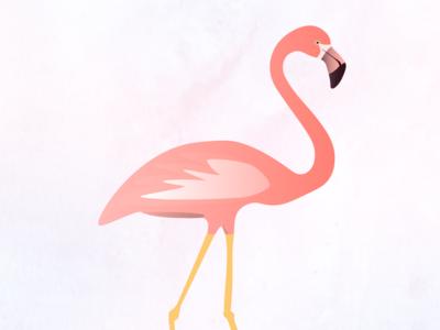 Pink Flamingo birds illustrator graphic art flamingos flamingo