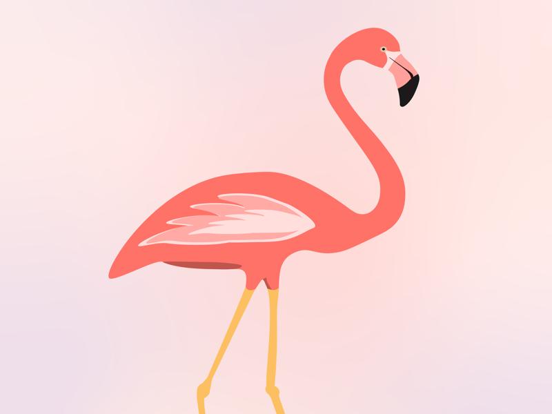 Flamingo living coral vector pink flamingo