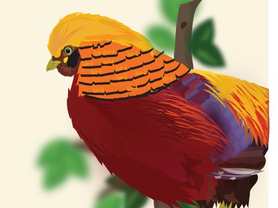 Golden Pheasant ( Chrysolophus pictus ) bird illustration bird digitalart working space design illustrator illustration