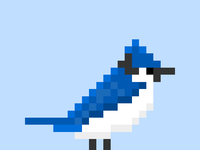 Bluejaylarge