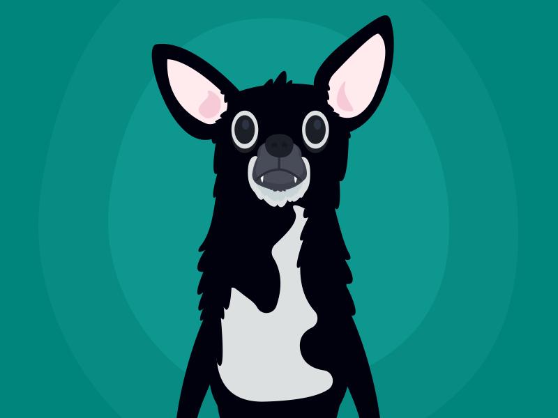 Baron Update #2 pet animal dog chihuahua vector illustration