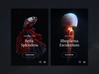 Seaworld web design cards button fish sea black dark red product jellyfish
