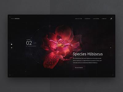 Species Hibiscus space species plants flowers red