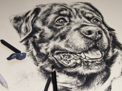 Dog Charcaol Drawing