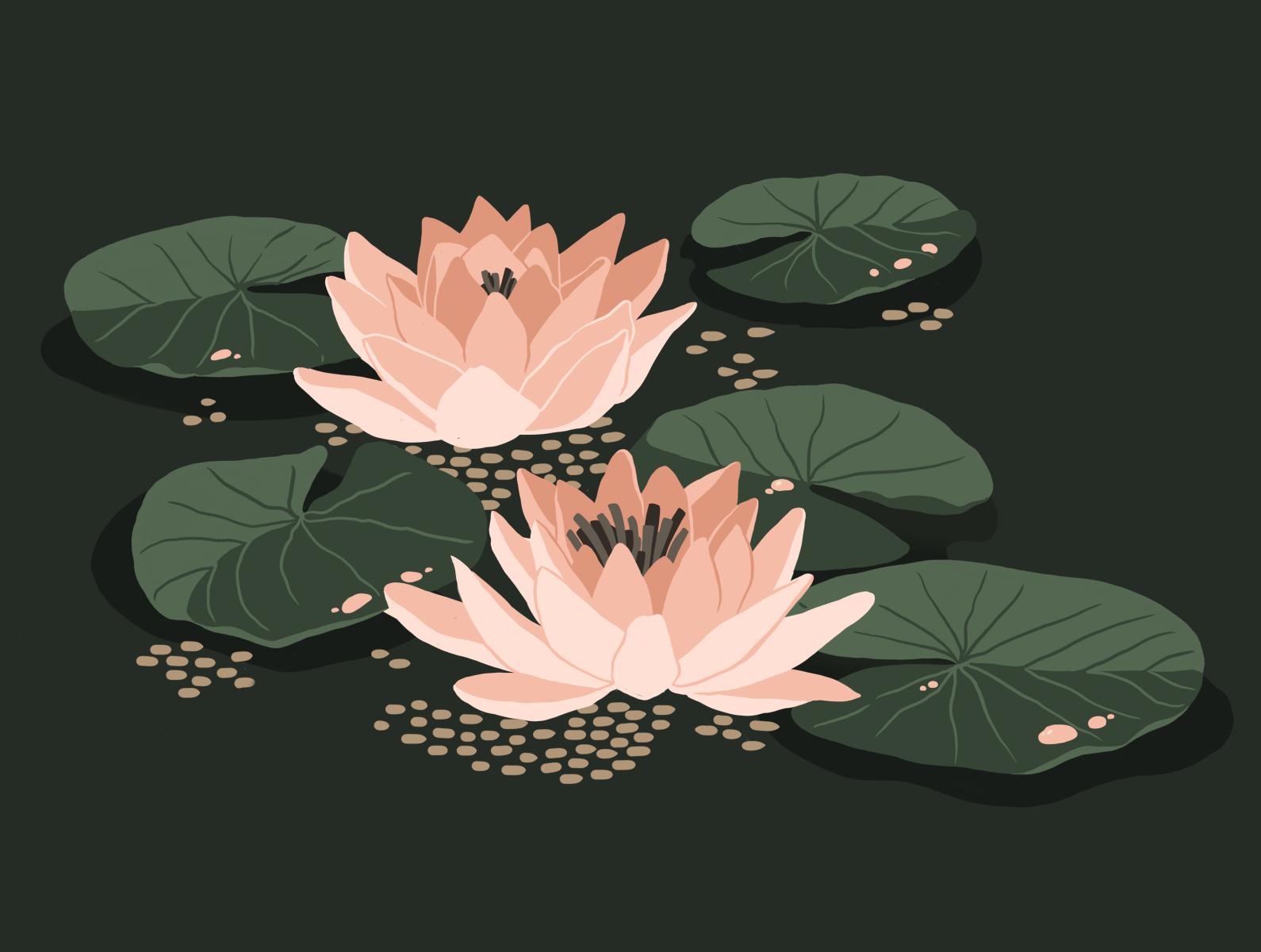 Water lily by maria shanina