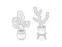 Exotic houseplants