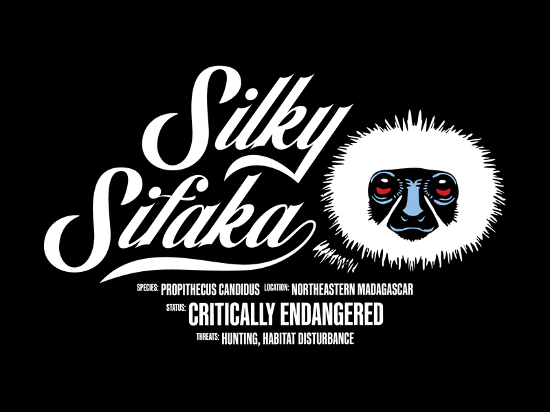Silky Sifaka endangered species typography script type lettering illustration