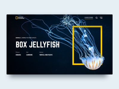 National Geographic Header dailyui web national geographic webdesign ux ui