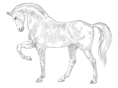 Horse illustration - Woodcut style practice vintage animal line art practice procreateapp procreate art shading intricate woodblock woodcut illustration
